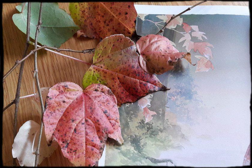 Herbstblätter neben einem Seitenausschnitt, der ebenfalls Blätter zeigt