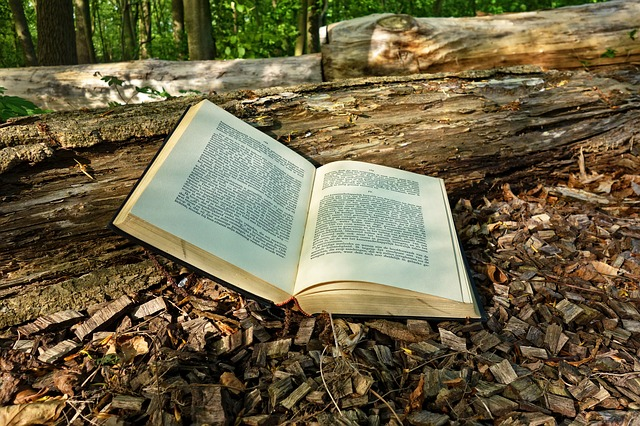 Aufgeschlagenes Buch auf Blättern und einem Baum
